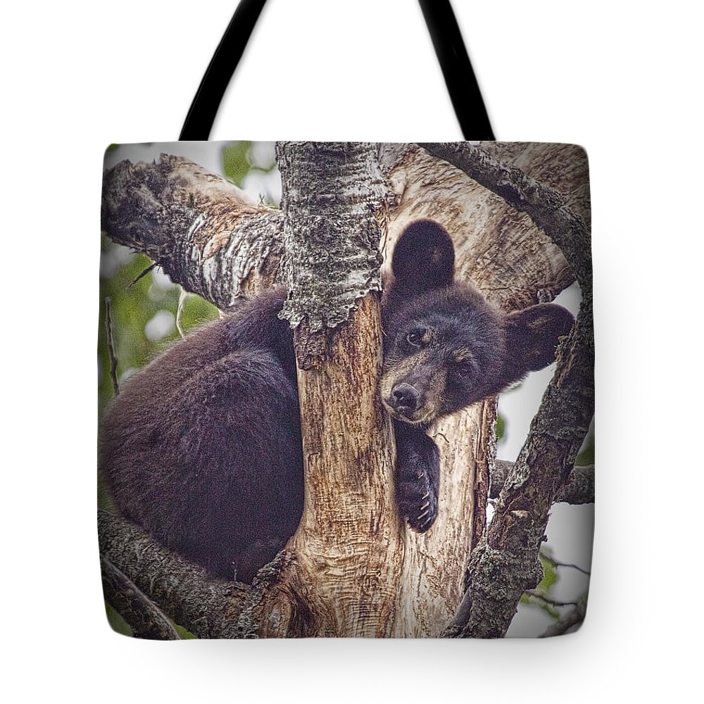 Art Tote Bag featuring the photograph Black Bear Cub No 3224 by Randall Nyhof
