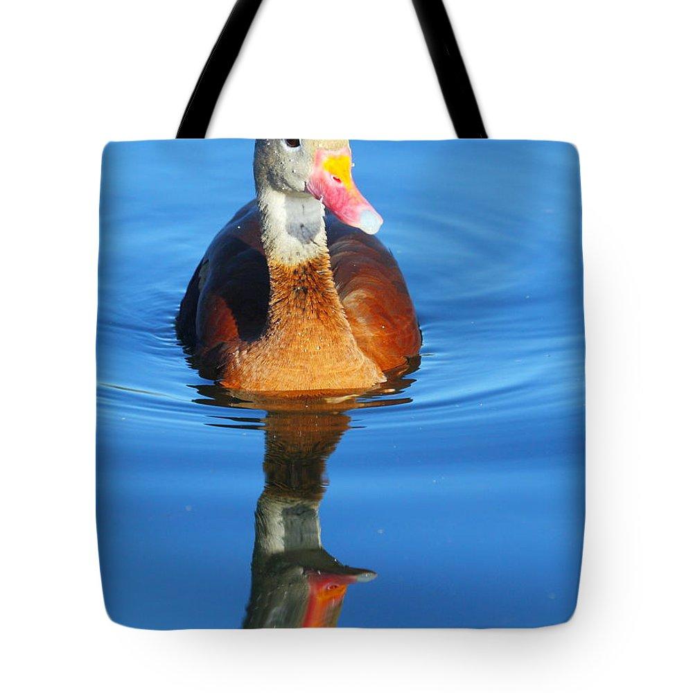 Black-bellied Whistling-duck Tote Bag featuring the photograph Black-bellied Whistling-duck by Andrew McInnes