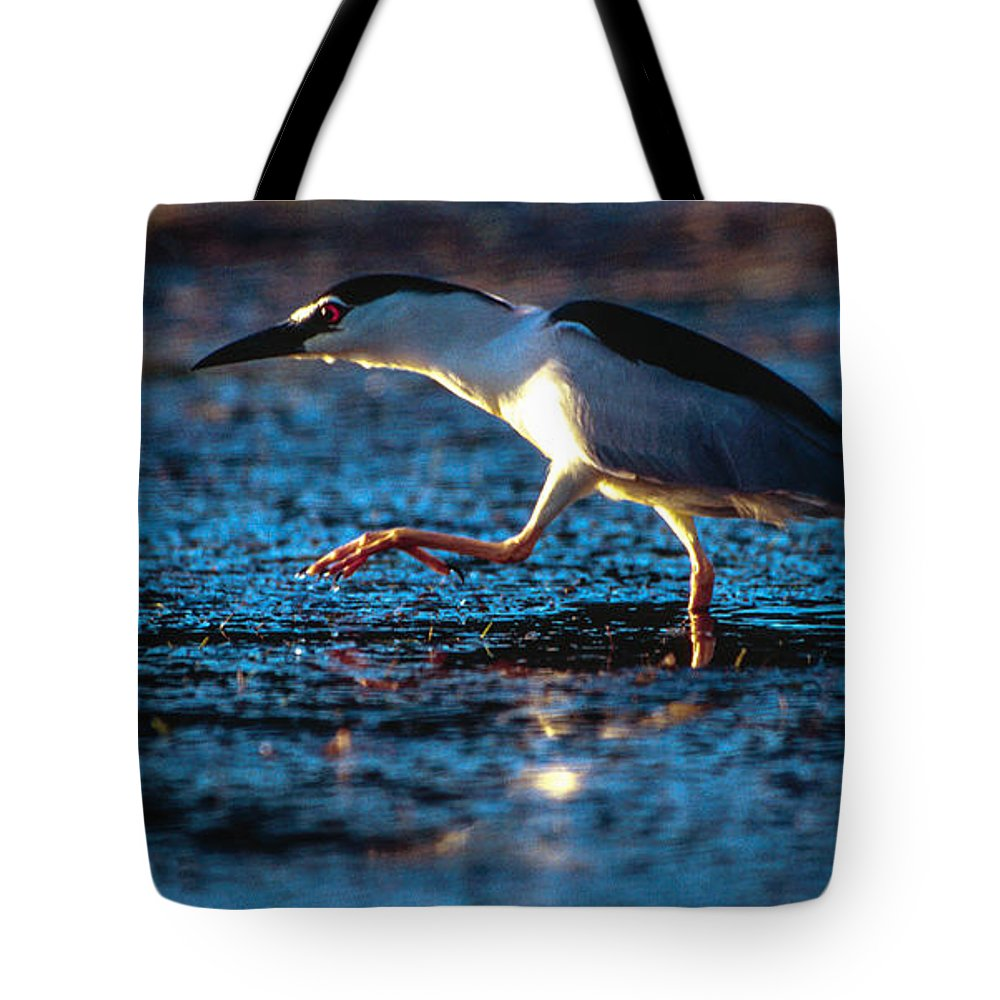 Africa Tote Bag featuring the photograph Black-crowned Night Heron by Alistair Lyne