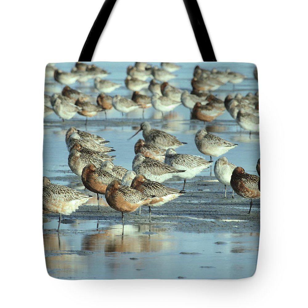 Fn Tote Bag featuring the photograph Black-tailed Godwit Limosa Limosa Flock by Flip De Nooyer