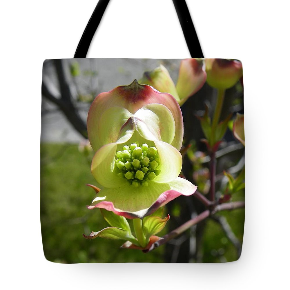 Dogwood Tote Bag featuring the photograph Blossoming by KD Johnson