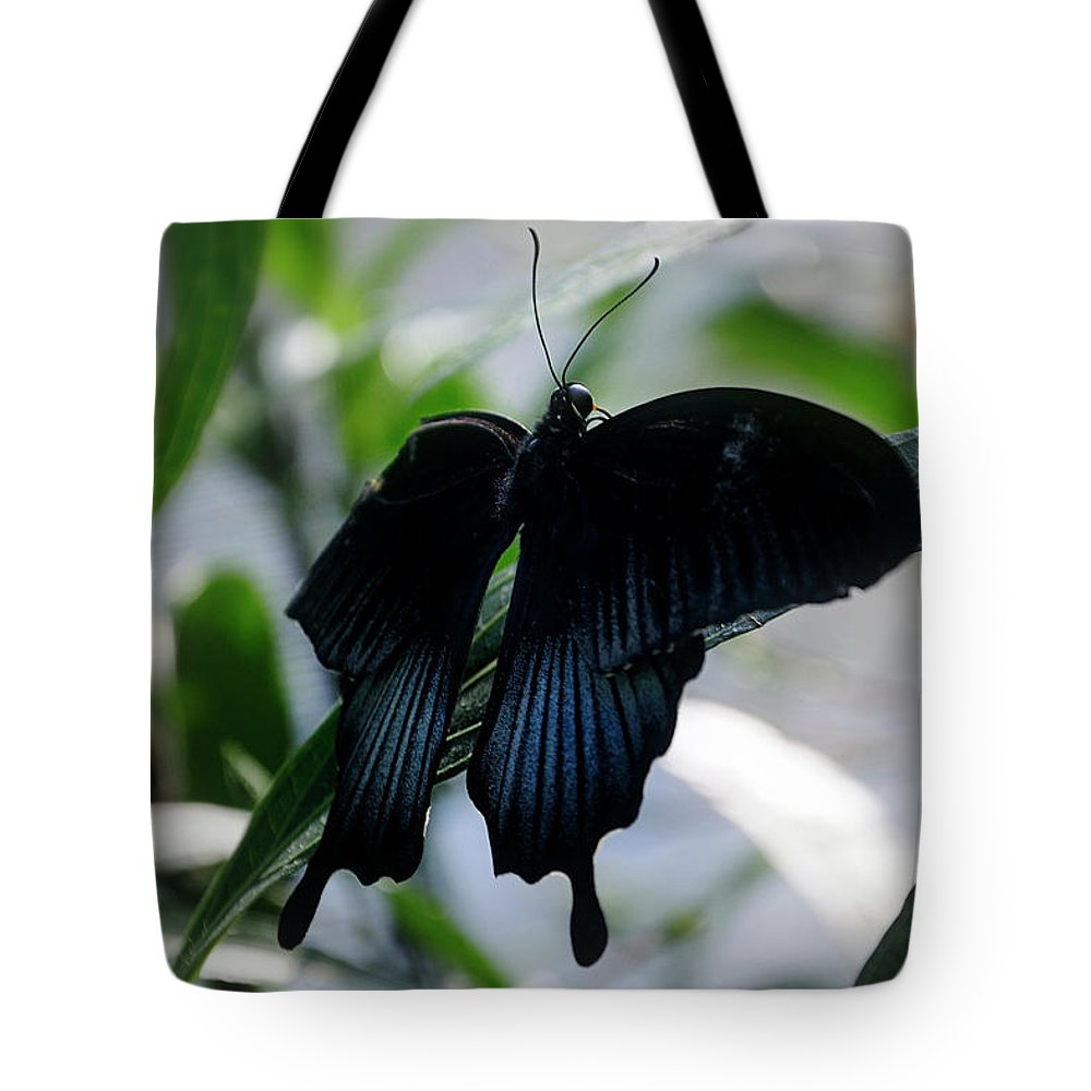 Blue-black Butterfly Tote Bag featuring the photograph Blue-black Butterfly by Mark Valentine