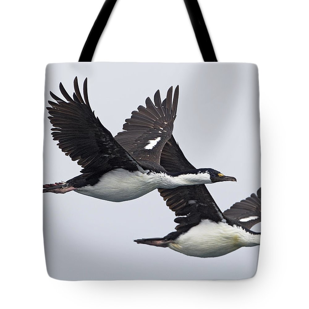 Mp Tote Bag featuring the photograph Blue-eyed Cormorant Phalacrocorax by Ingo Arndt