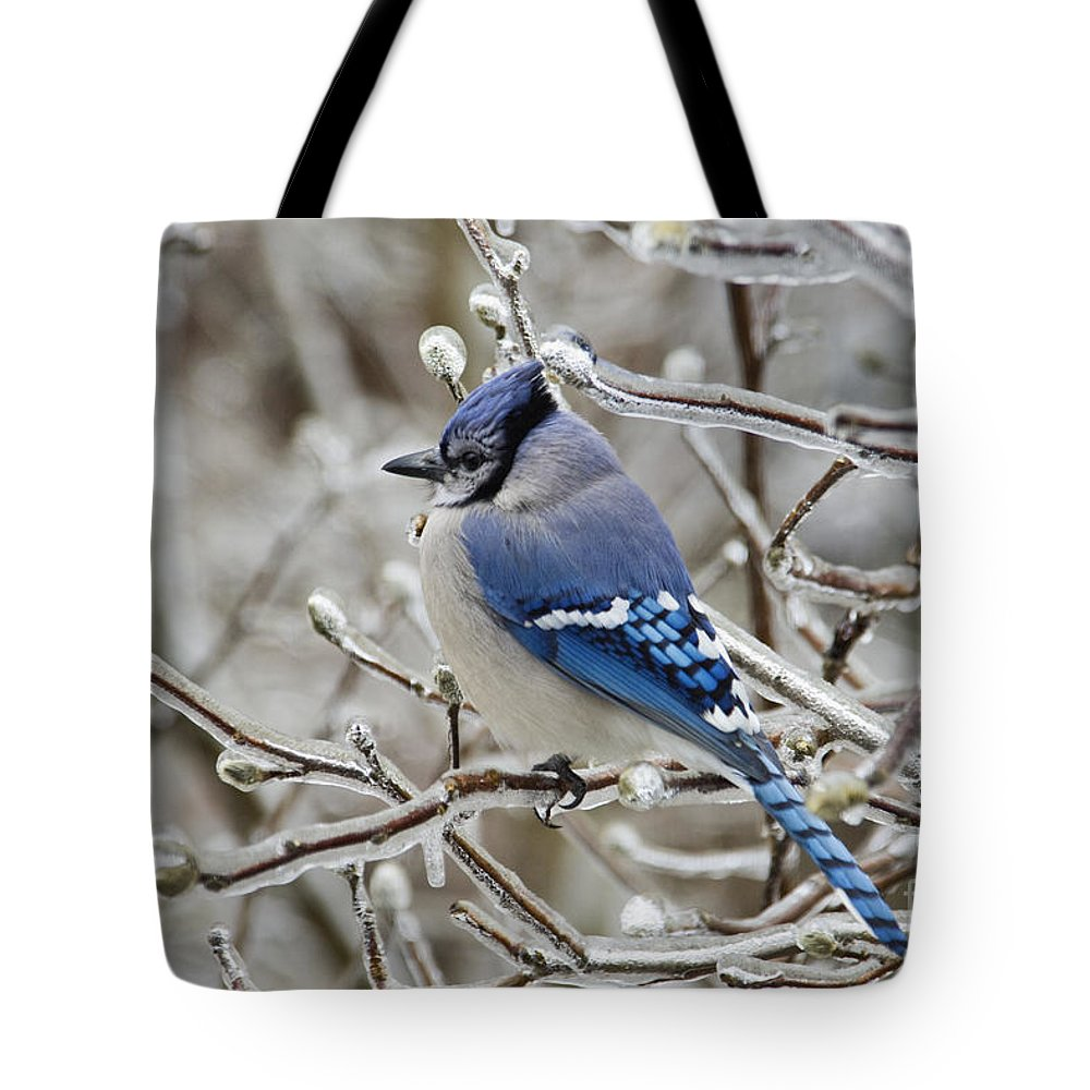 Blue Tote Bag featuring the photograph Blue Jay - D003568 by Daniel Dempster