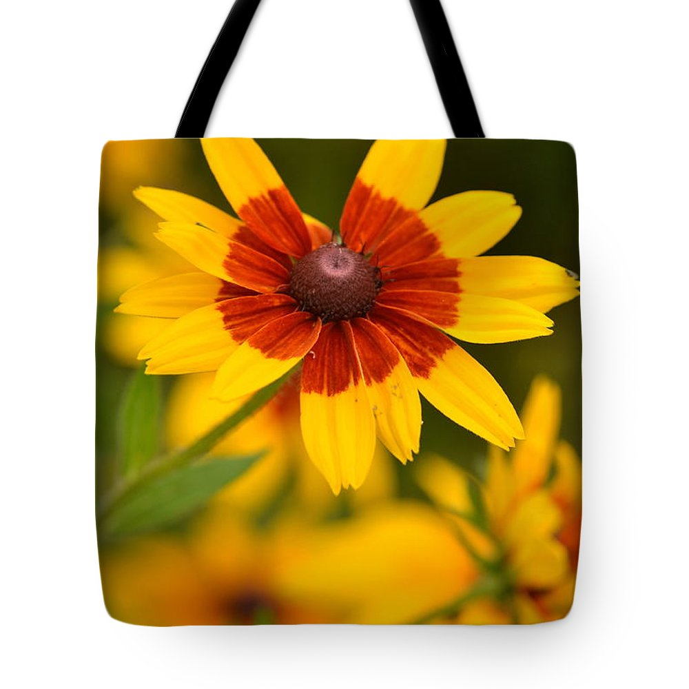 Flower Tote Bag featuring the photograph Blush-eyed Susan by JD Grimes