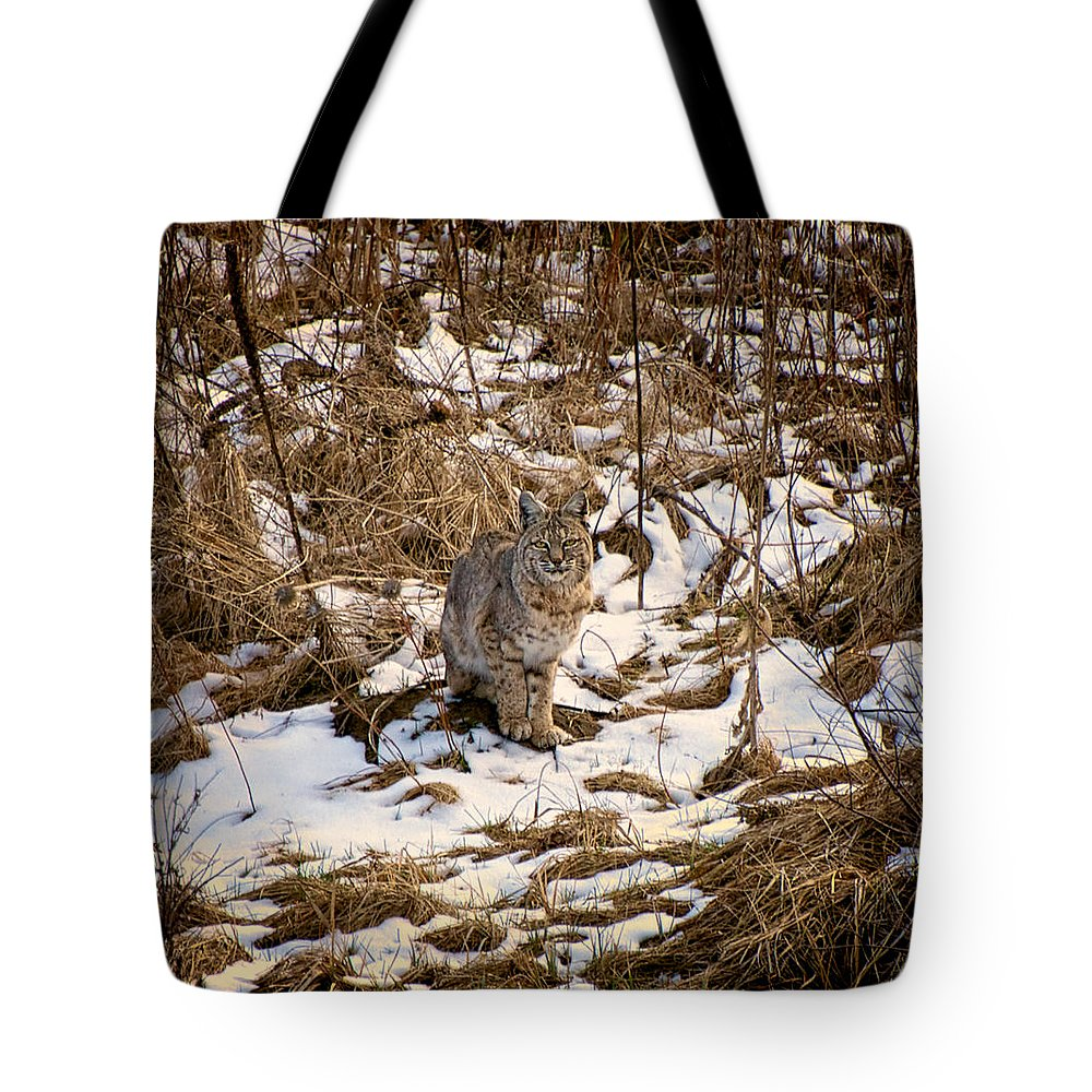 Bobcat Tote Bag featuring the photograph Bob The Cat by Britt Runyon