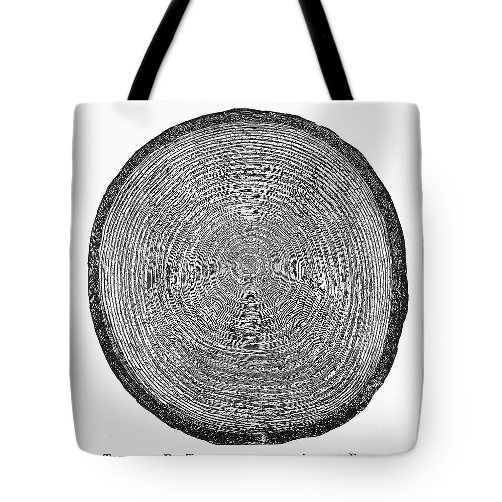 19th Century Tote Bag featuring the photograph Botany: Fir Tree Trunk by Granger