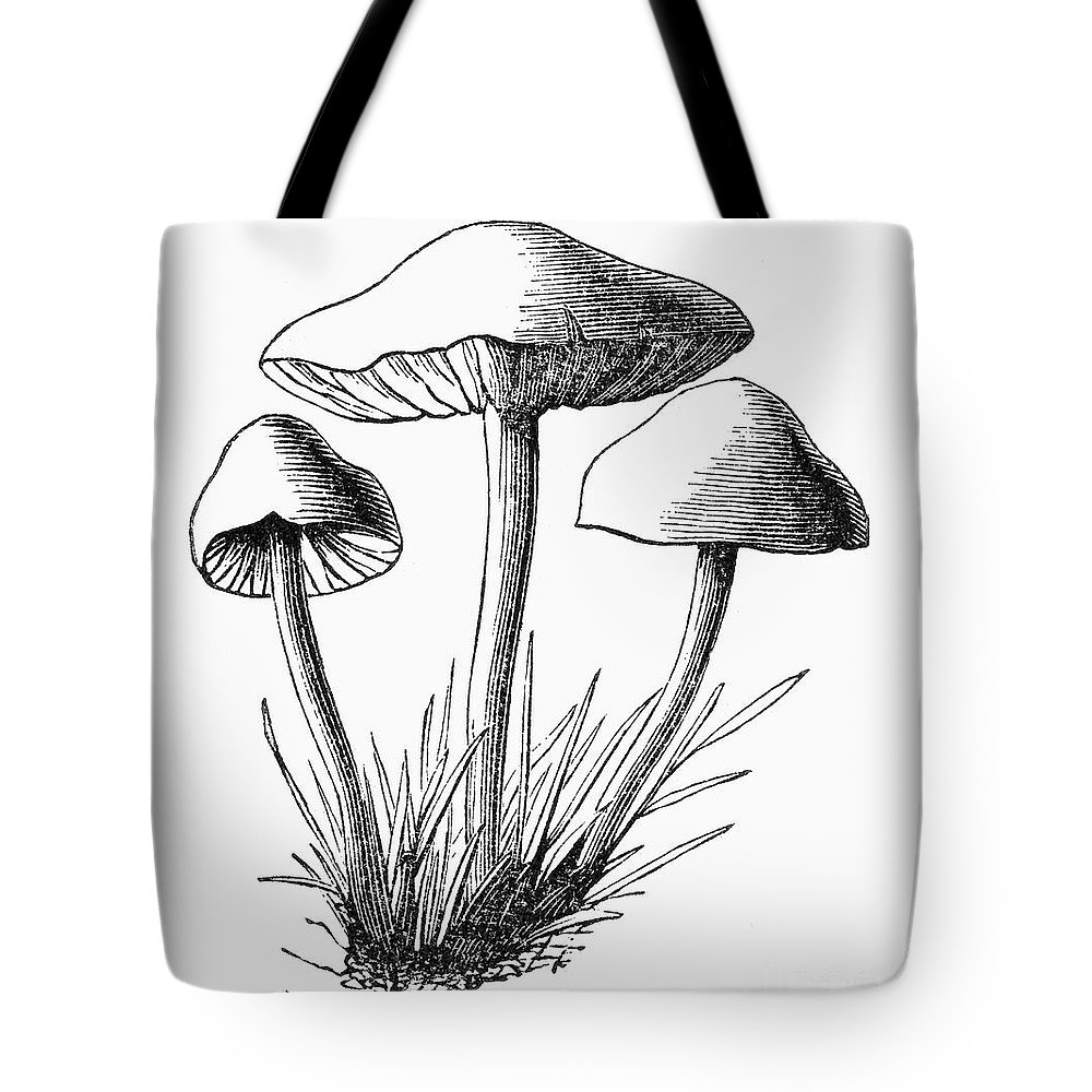1875 Tote Bag featuring the photograph Botany: Mushroom by Granger