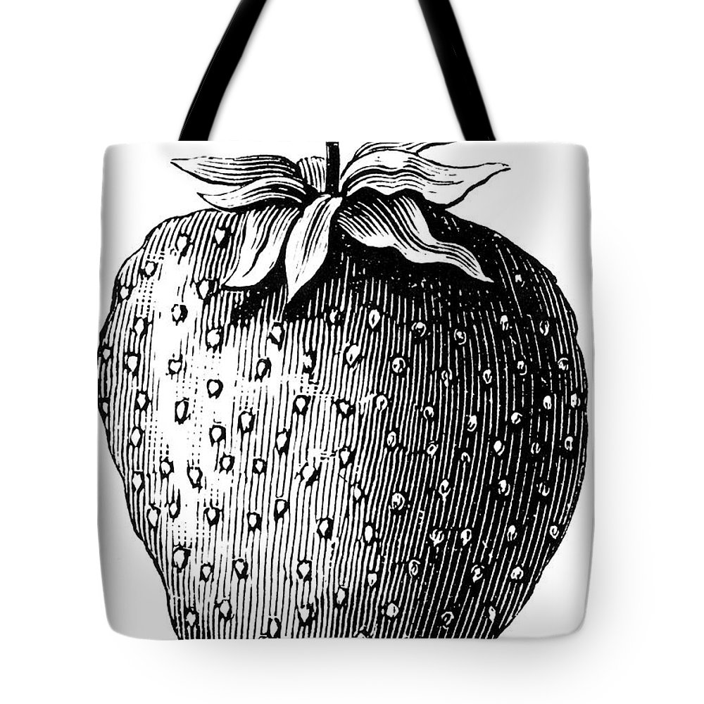 Biology Tote Bag featuring the photograph Botany: Strawberry by Granger