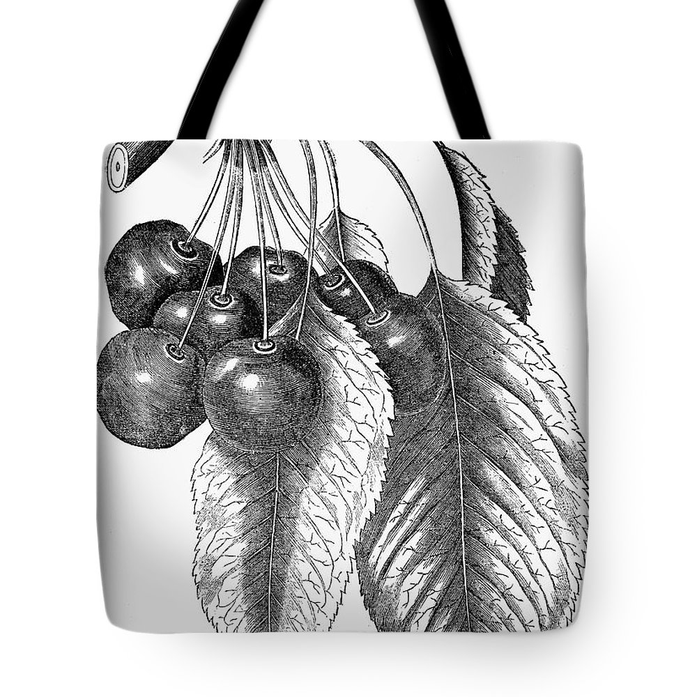 19th Century Tote Bag featuring the photograph Botany: The Cherry by Granger