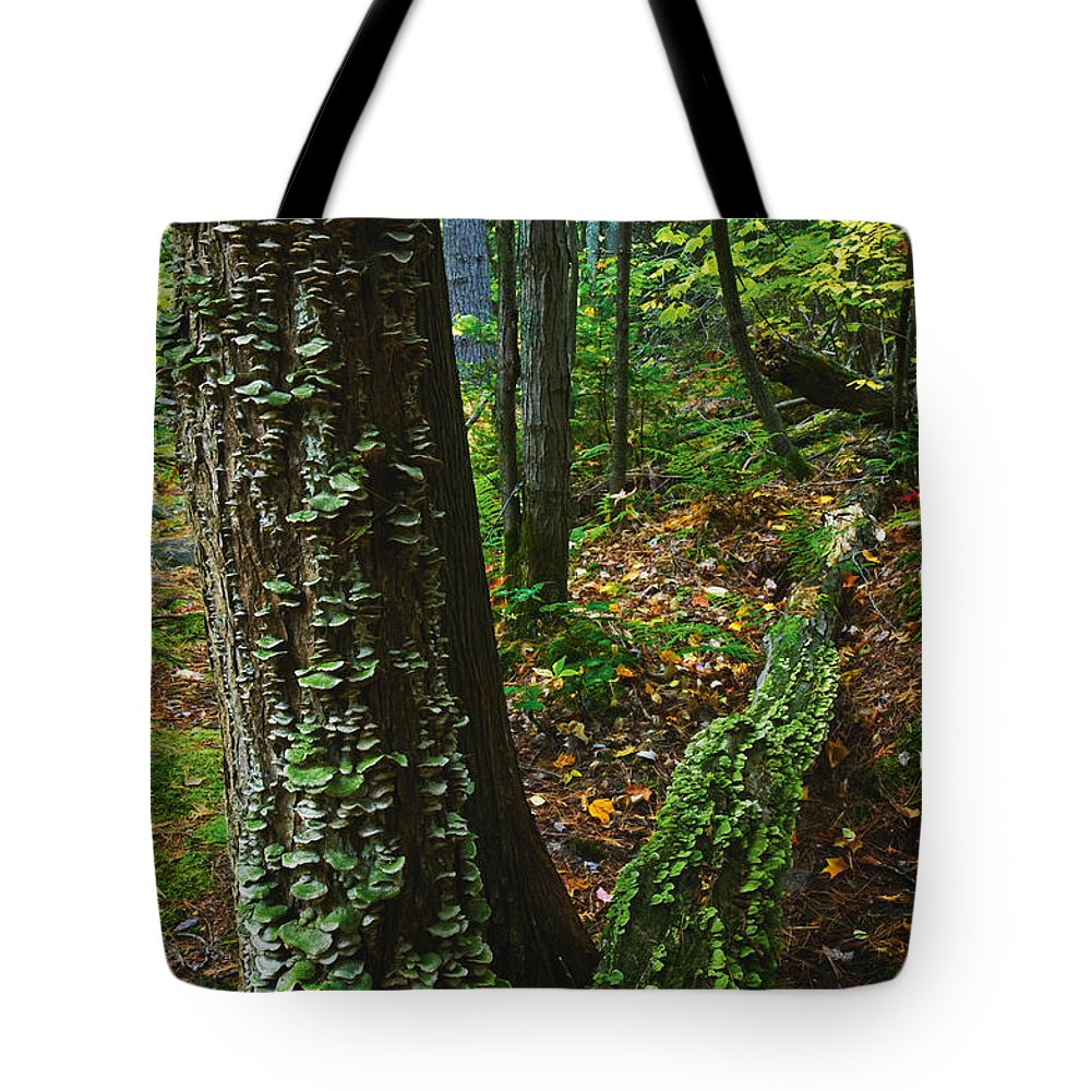 Bracket Fungus Tote Bag featuring the photograph Bracket Fungi On Pine At Granite Ridge by Mike Grandmailson