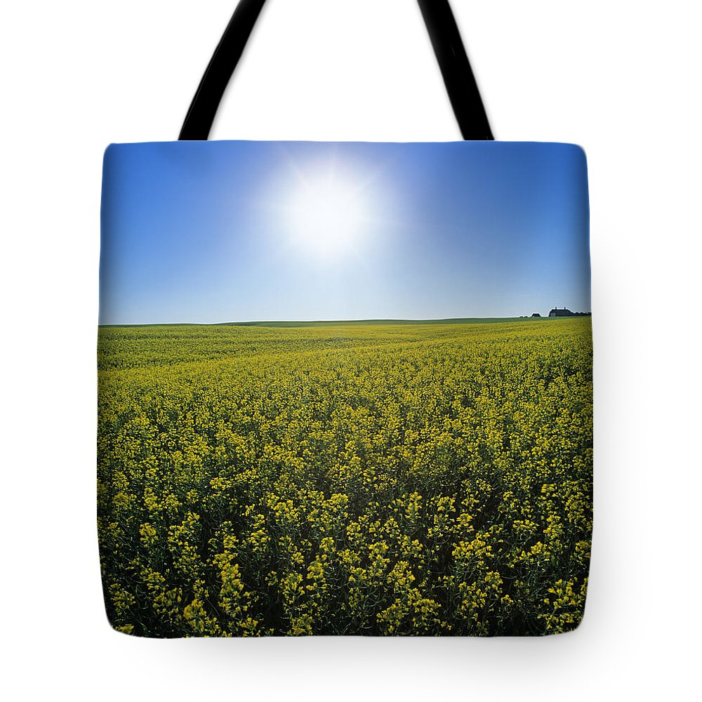 Colour Image Tote Bag featuring the photograph Bright Sun And Bloom Stage Mustard by Dave Reede