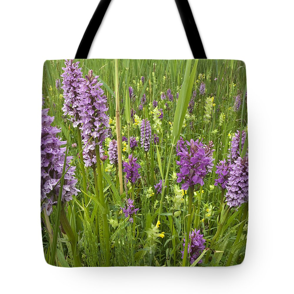 Nis Tote Bag featuring the photograph Broad-leaved Marsh Orchid Dactylorhiza by Jan Vink