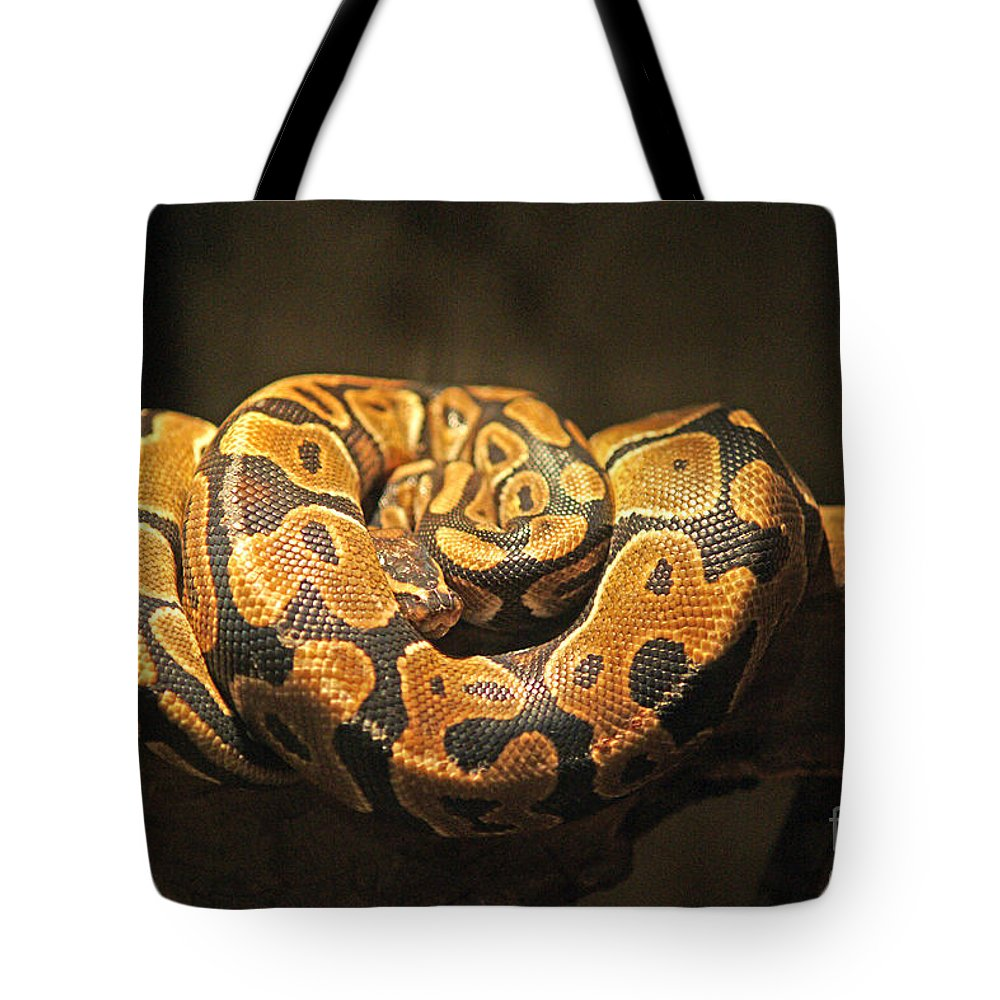 Snakes Tote Bag featuring the photograph Brown And Black Snake by Randy Harris
