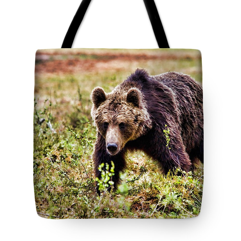 Bear Tote Bag featuring the painting Brown Bear 210 by Dean Wittle