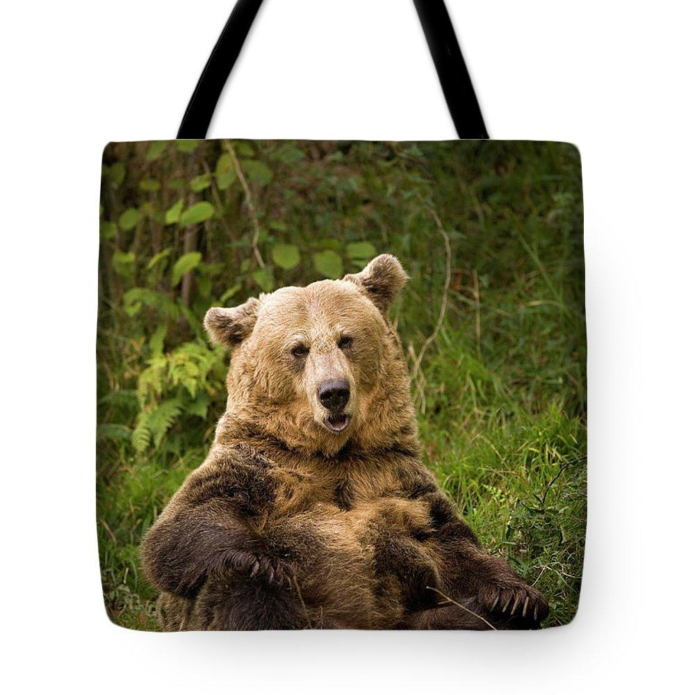 Fn Tote Bag featuring the photograph Brown Bear Ursus Arctos, Asturias, Spain by Ramon Navarro