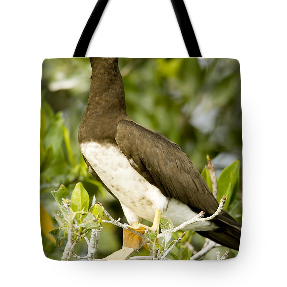 Mangrove Trees Tote Bag featuring the photograph Brown Booby Sula Leucogaster by Tim Laman