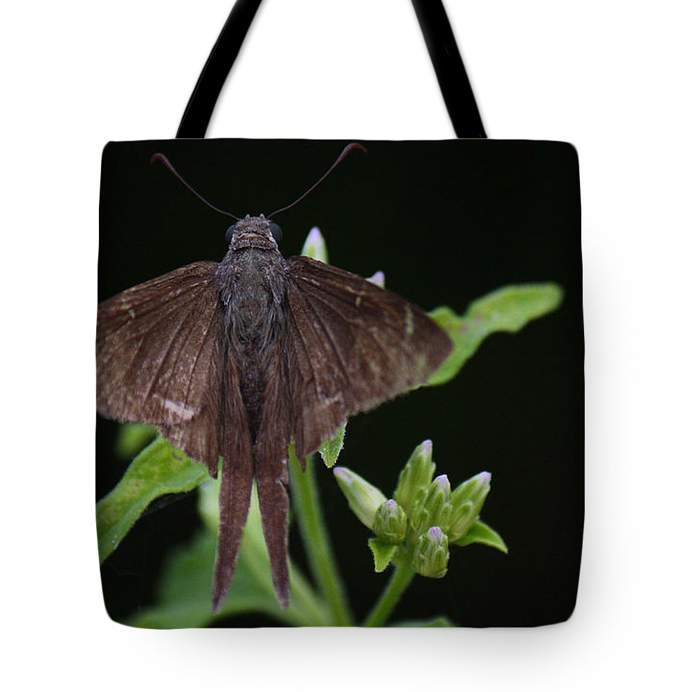 Roena King Tote Bag featuring the photograph Brown Butterfly Dorantes Longtail by Roena King