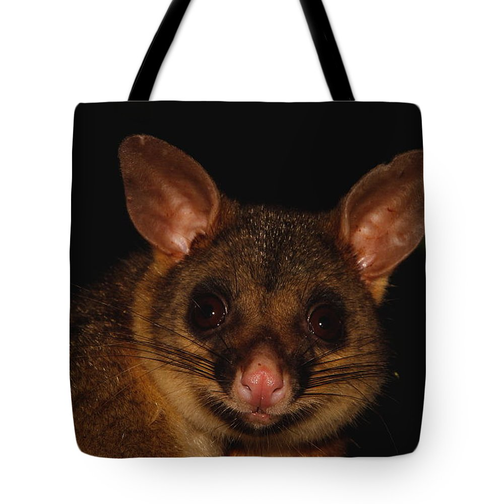 Possum Tote Bag featuring the photograph Brush-tailed Possum by Bruce J Robinson