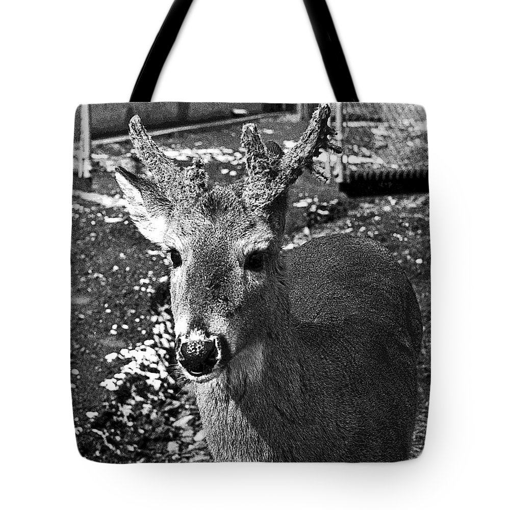 Brushy Mountain State Penitentiary Tote Bag featuring the photograph Brushy Mountain 3 by Paul Mashburn