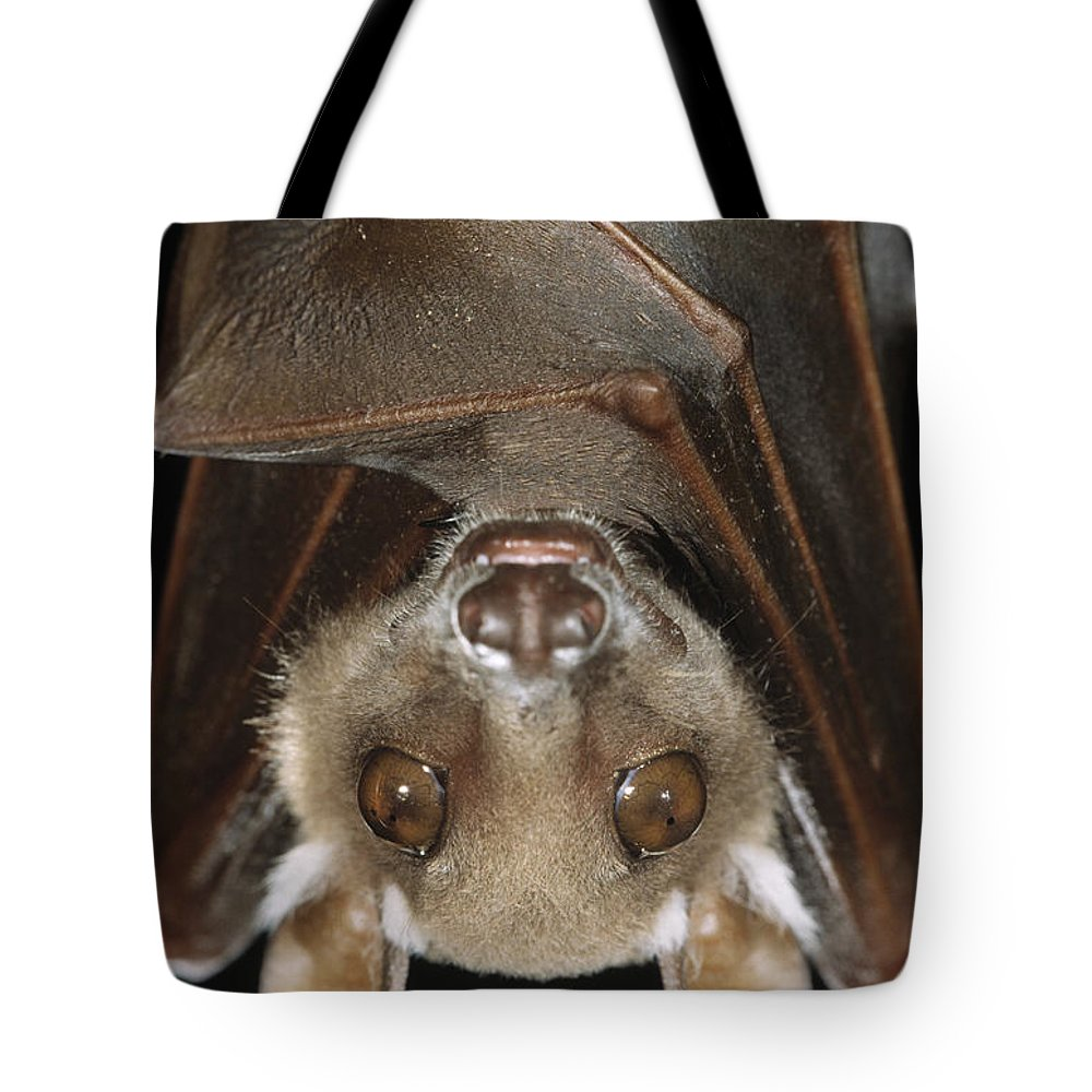 Fn Tote Bag featuring the photograph Buettikofers Epauletted Bat Epomops by Ingo Arndt