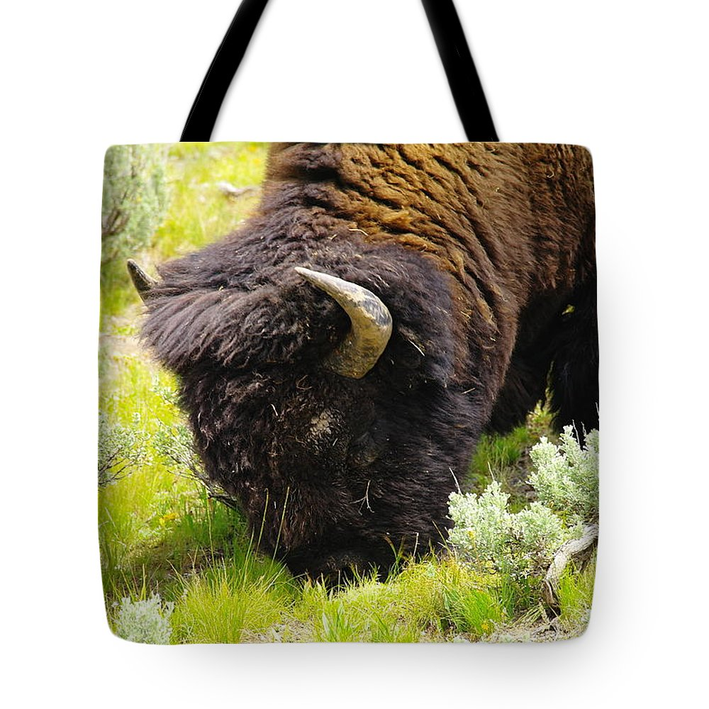 Bison Tote Bag featuring the photograph Buffalo Grazing by Jeff Swan