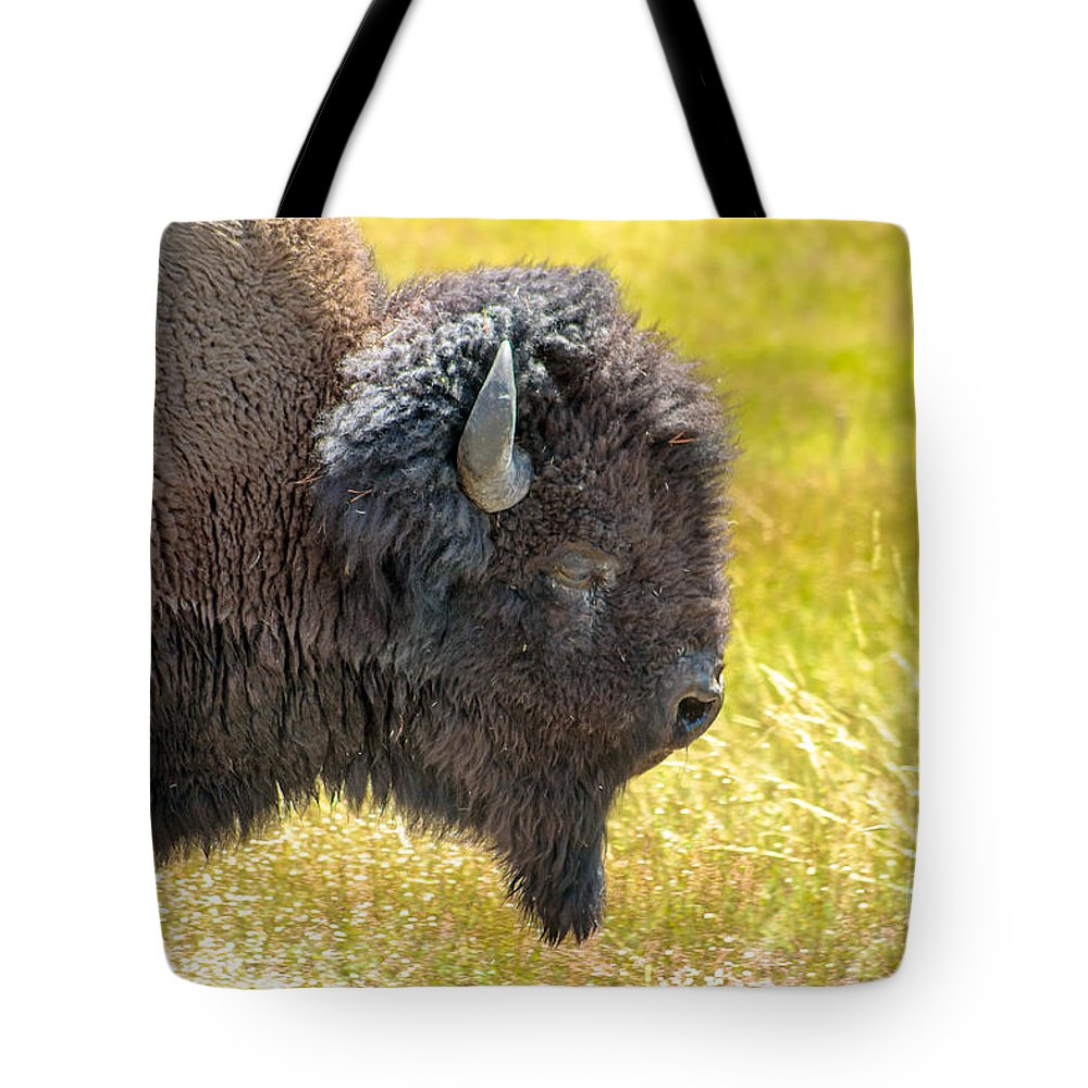 Animals Tote Bag featuring the photograph Buffalo Portrait by Robert Bales