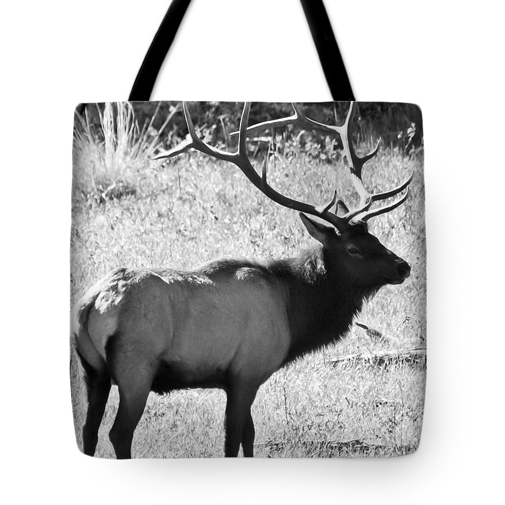 Elk Tote Bag featuring the photograph Bull Elk by Colleen Coccia