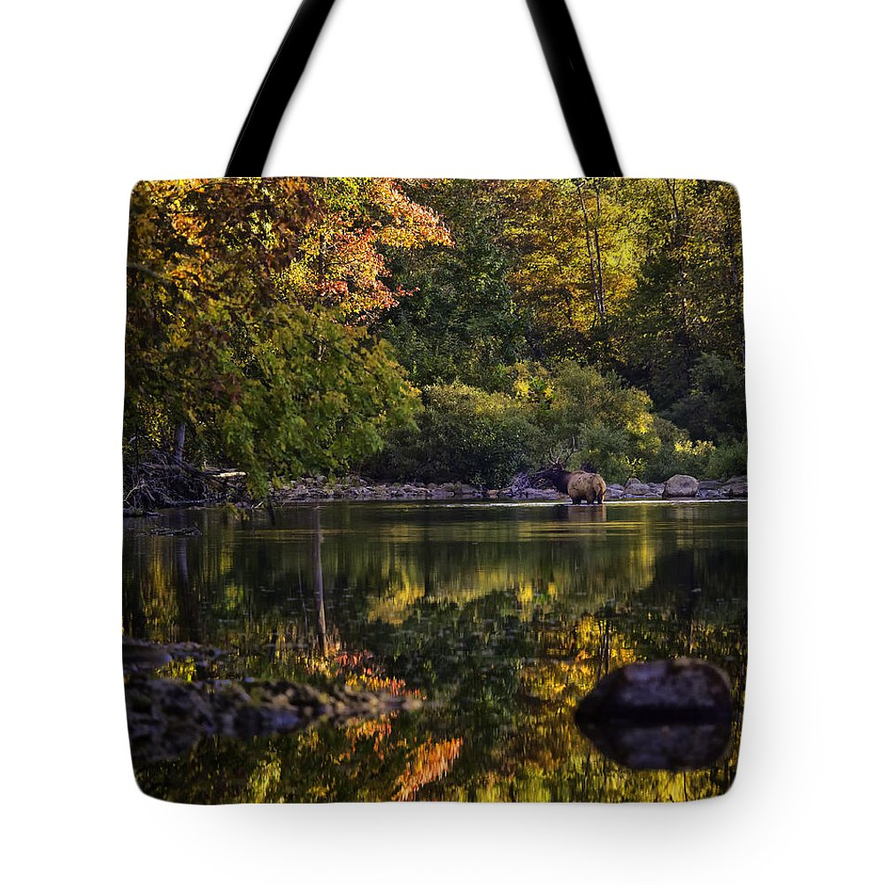 Bull Elk Tote Bag featuring the photograph Bull Elk In Buffalo National River In Fall Color by Michael Dougherty