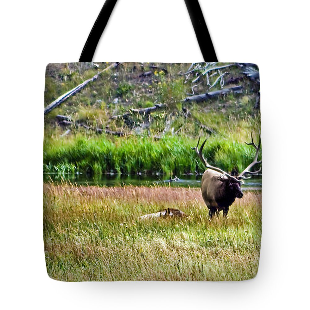 Animals Tote Bag featuring the photograph Bull Elk by Robert Bales