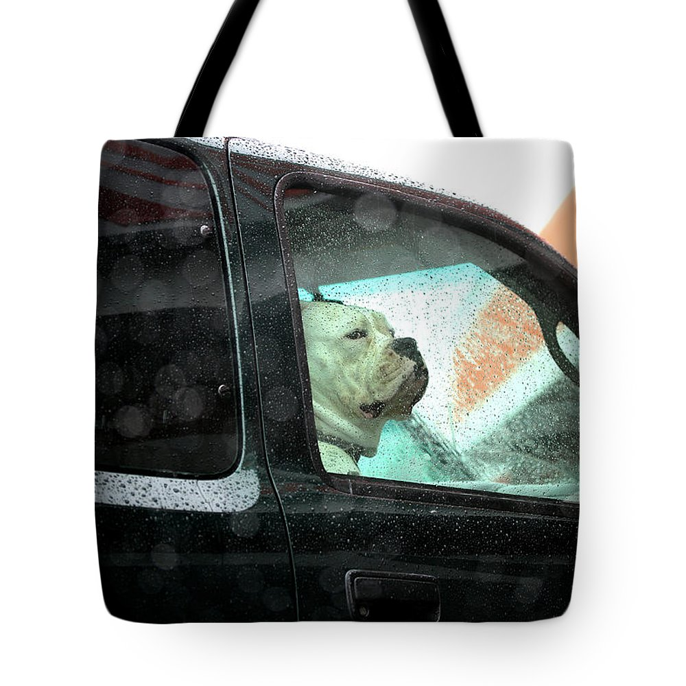 Dog Tote Bag featuring the photograph Bummed by Marie Jamieson