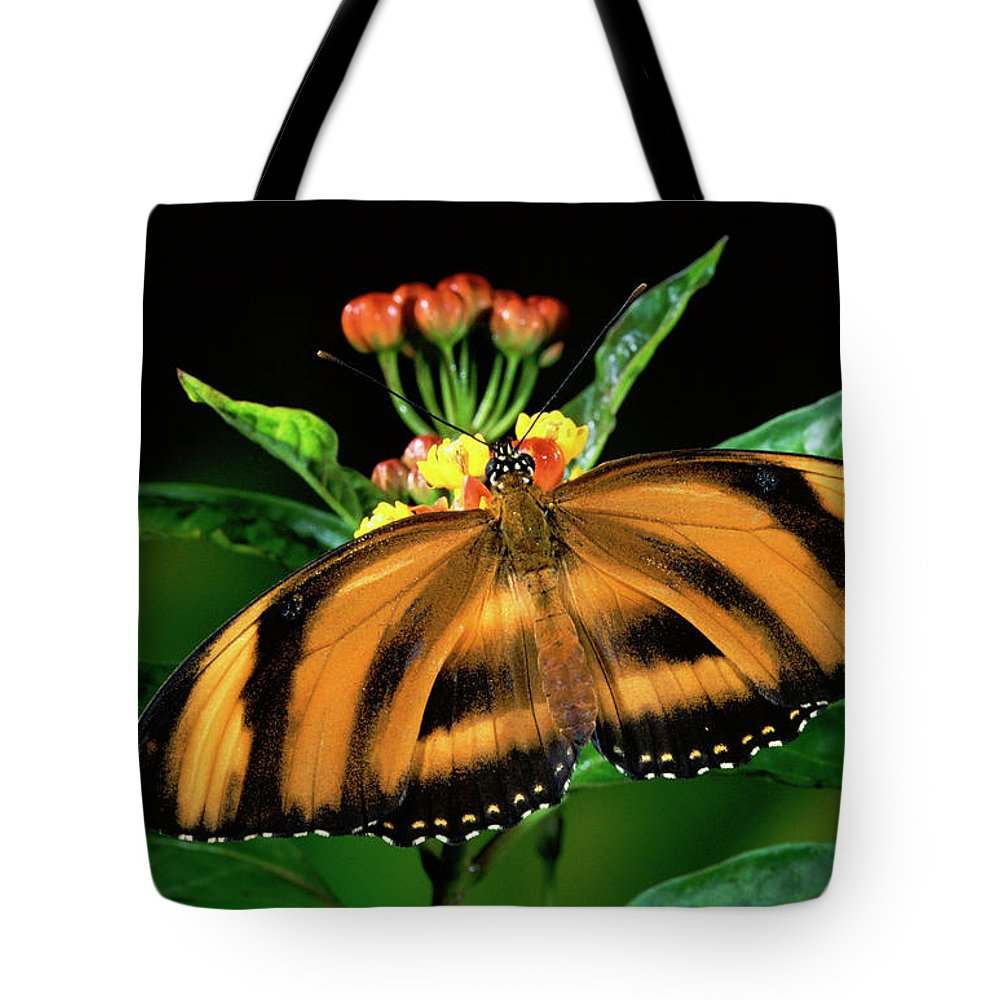 Mp Tote Bag featuring the photograph Butterfly Dryadula Heliconius Feeding by Michael & Patricia Fogden