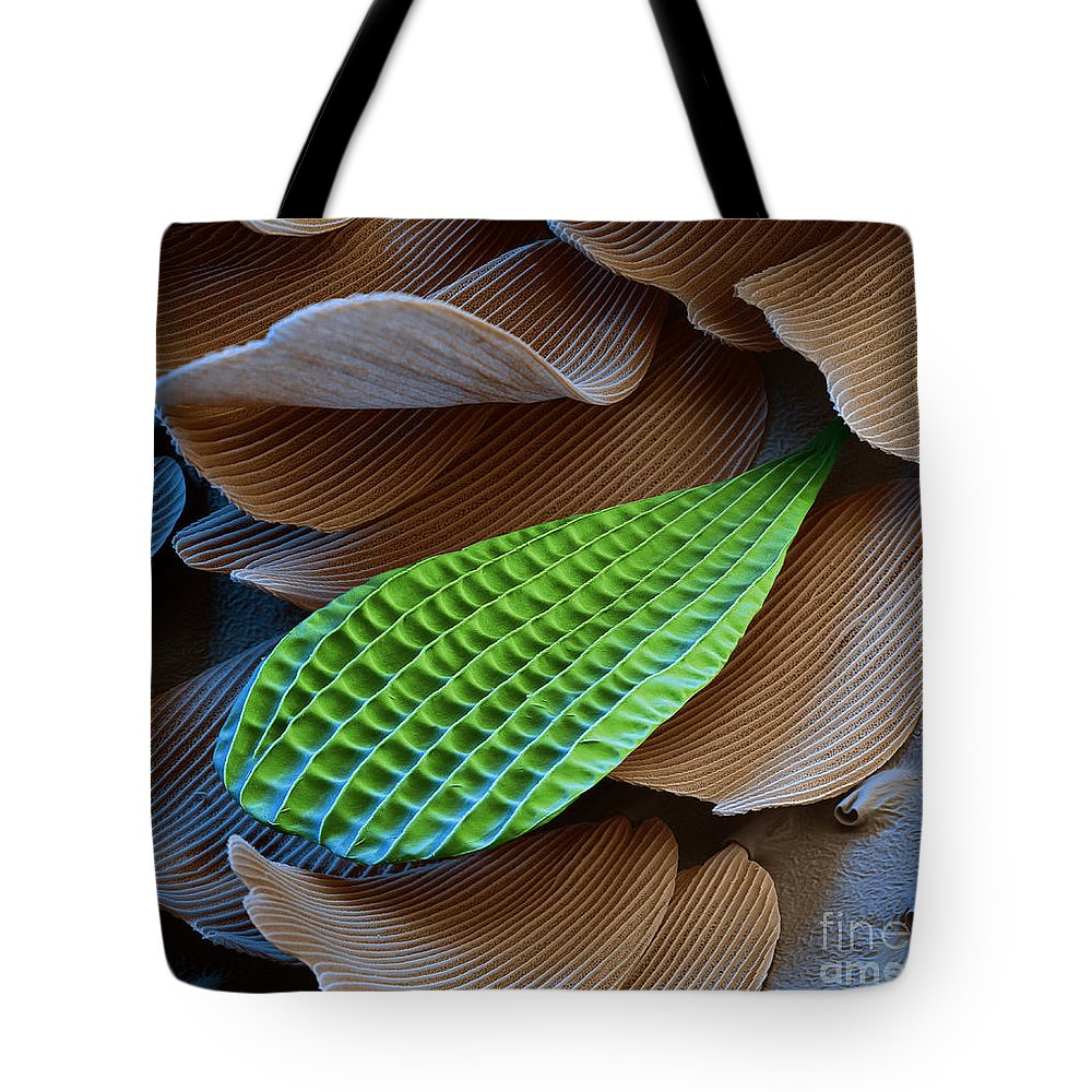 Science Tote Bag featuring the photograph Butterfly Wing Scale Sem by Eye of Science