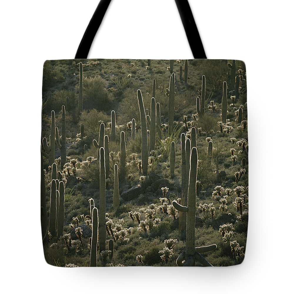 Plants Tote Bag featuring the photograph Cacti Near Tucson, Arizona by Skip Brown