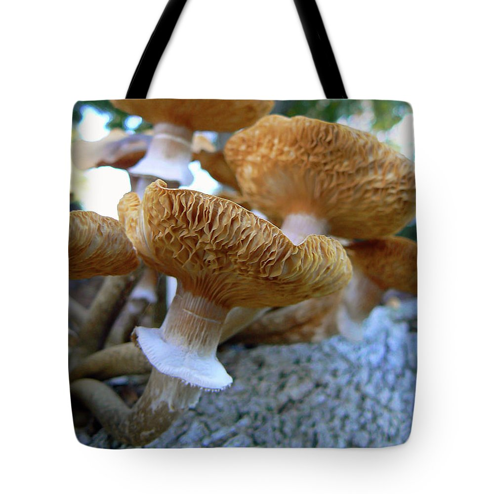 Mushroom Tote Bag featuring the photograph California Dreaming by Pamela Patch