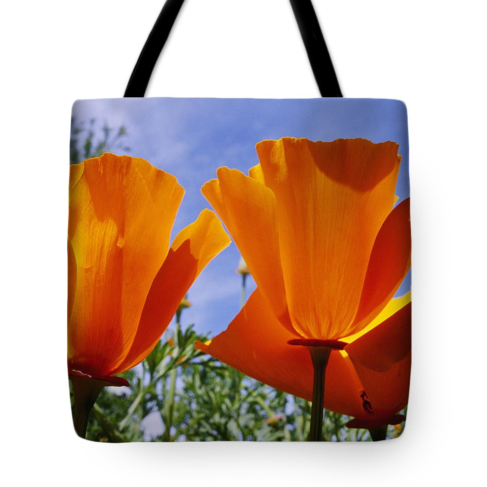 North America Tote Bag featuring the photograph California Poppies Eschscholtzia by Marc Moritsch