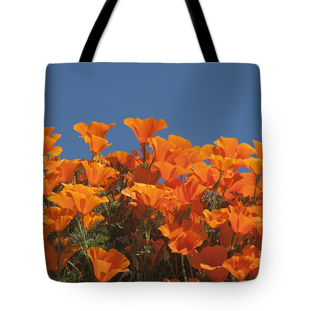 Sandra Bronstein Tote Bag featuring the photograph California Poppies by Sandra Bronstein