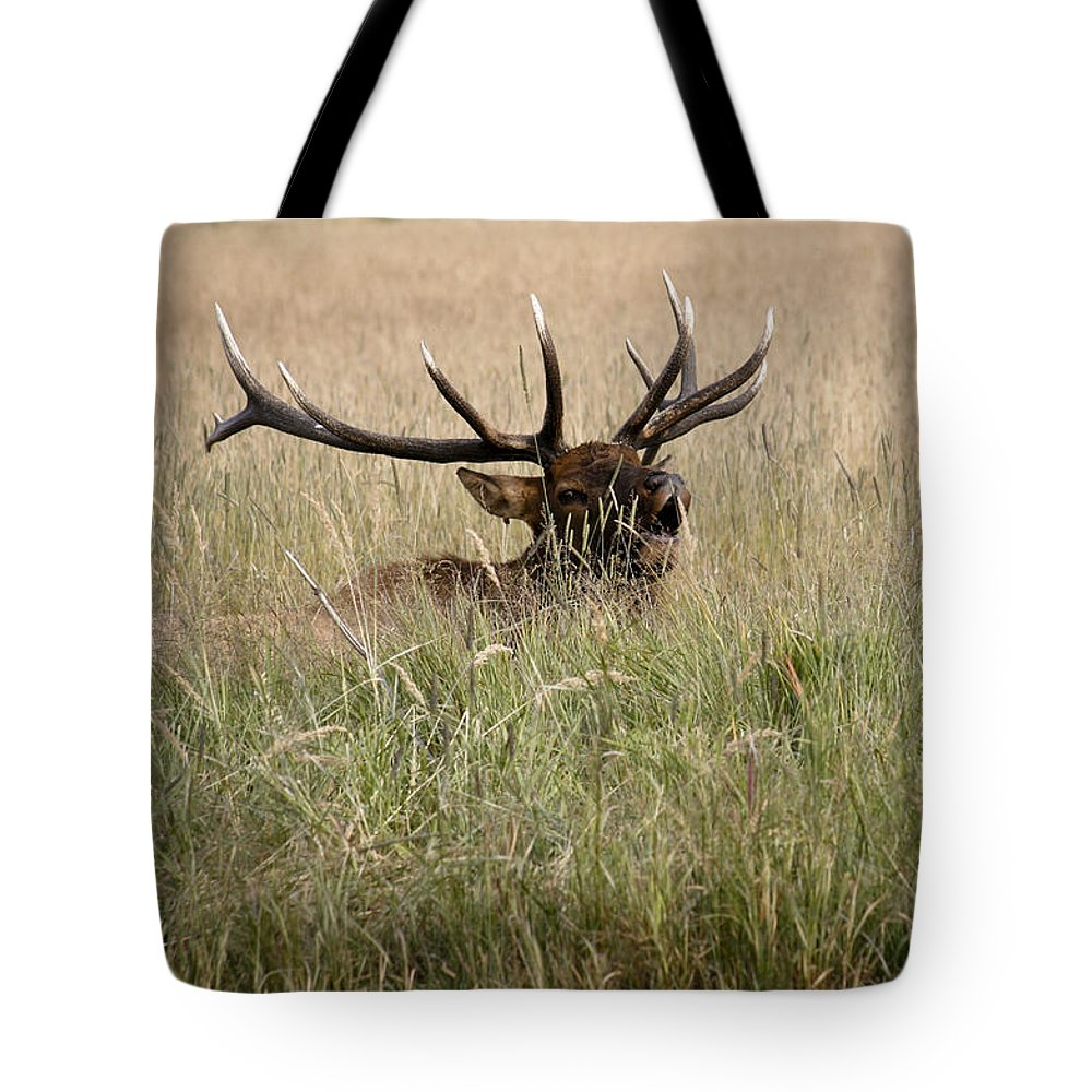 Elk Tote Bag featuring the photograph Call Of The Wild 1 by Marilyn Hunt