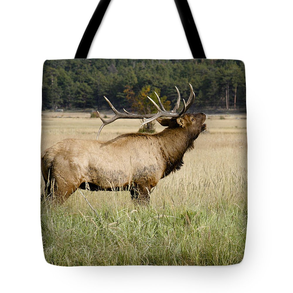 Elk Tote Bag featuring the photograph Call Of The Wild 2 by Marilyn Hunt