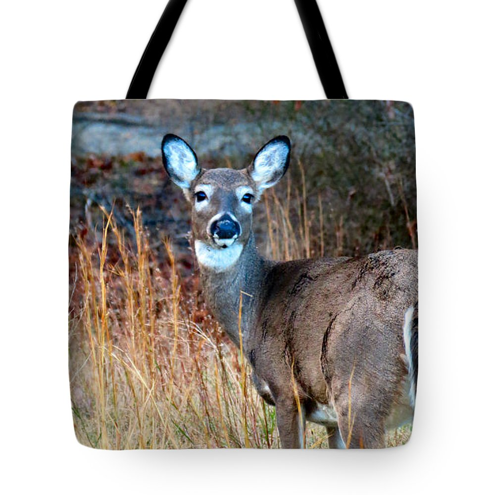 Deer Tote Bag featuring the photograph Call Of The Wild by Art Dingo