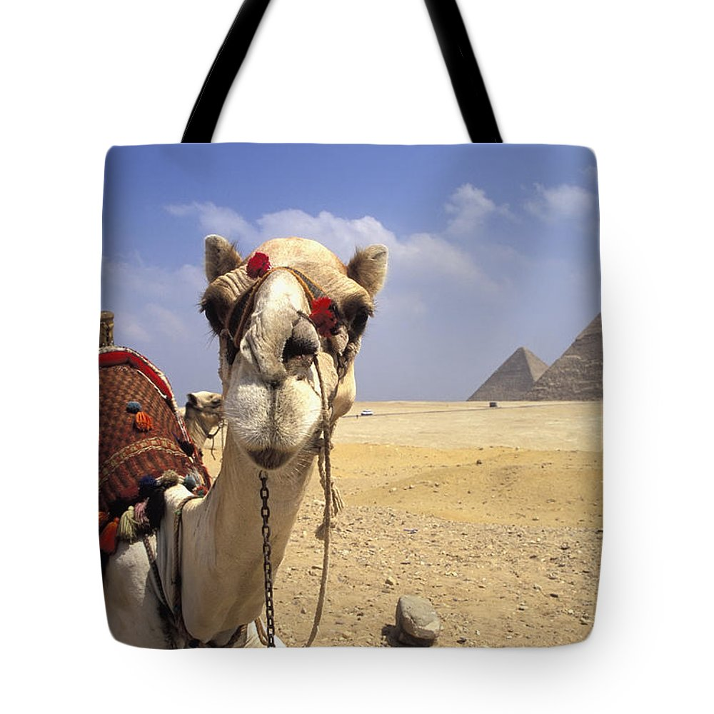 Animal Head Tote Bag featuring the photograph Camel In Giza Egypt by Axiom Photographic