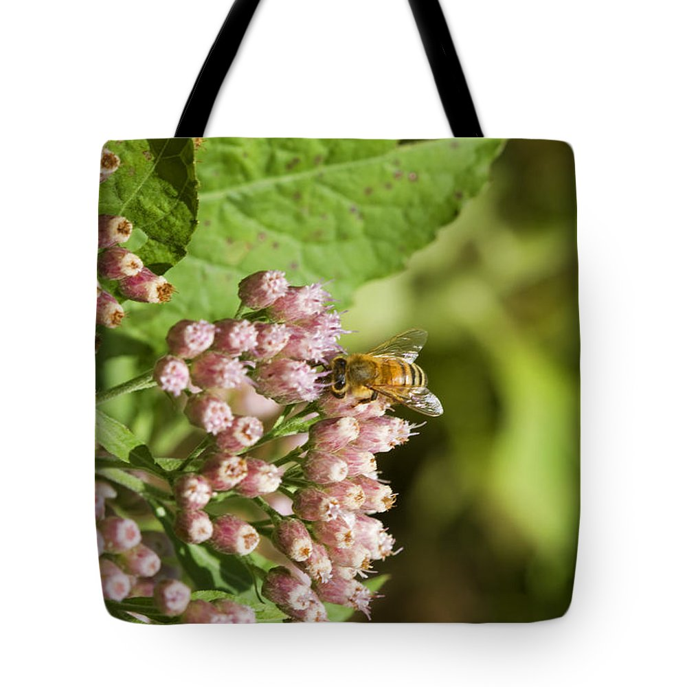 Pluchea Camphorata Tote Bag featuring the photograph Camphorweed Wildflowers And Honey Bee by Kathy Clark