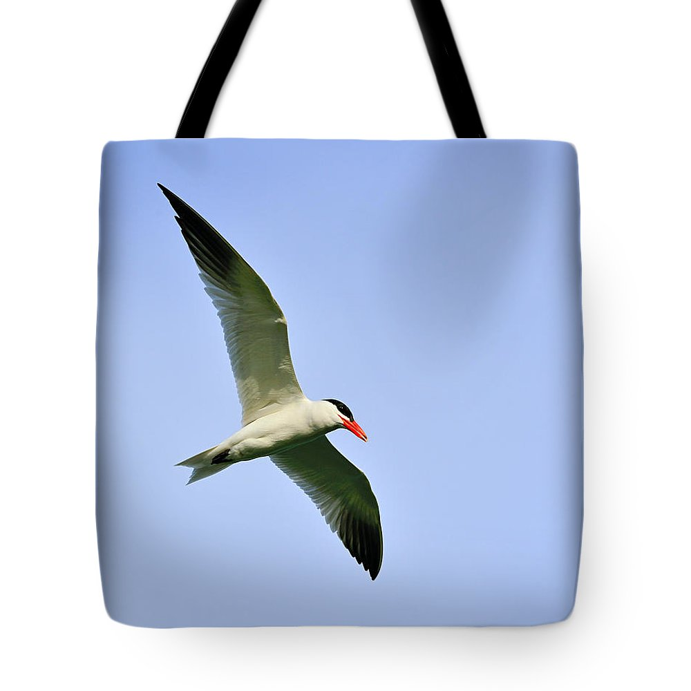 Caspian Tern Tote Bag featuring the photograph Caspian Tern by Tony Beck