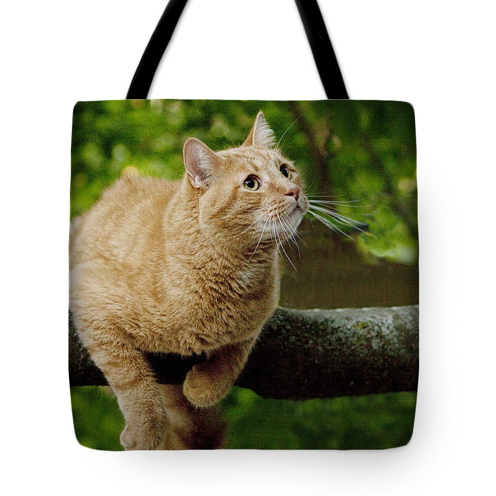 Art Tote Bag featuring the photograph Cat Hanging On A Limb by Randall Nyhof