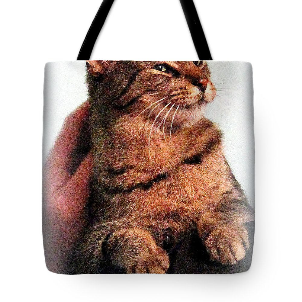 Cats Tote Bag featuring the photograph Cat Heaven by Kathy White