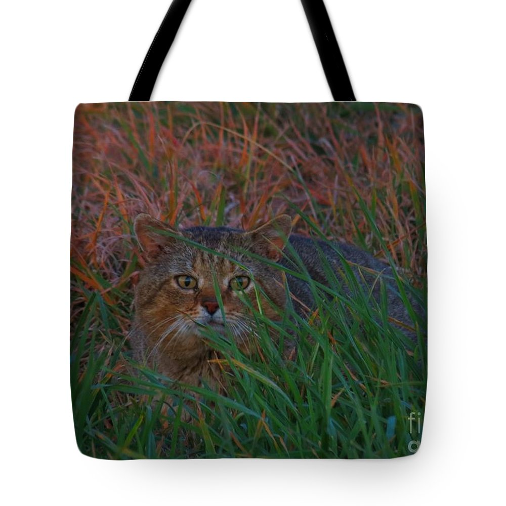 Cat Tote Bag featuring the photograph Cat In The Grasses by Rrrose Pix