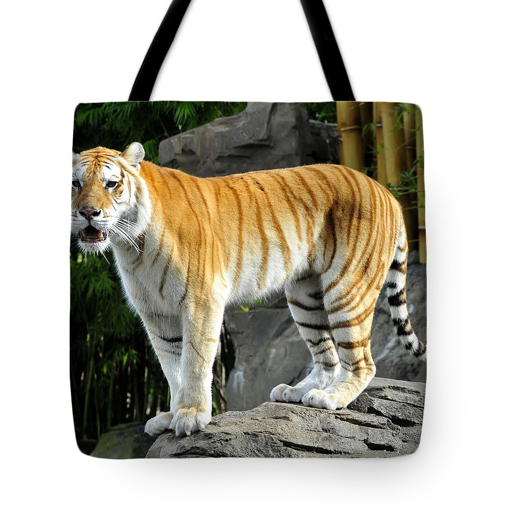 Fine Art Photography Tote Bag featuring the photograph Cat On The Rocks by David Lee Thompson