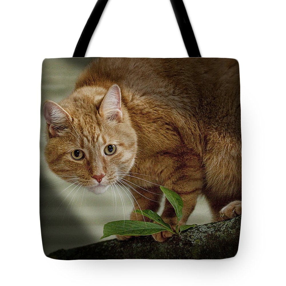 Art Tote Bag featuring the photograph Cat Out On A Limb by Randall Nyhof