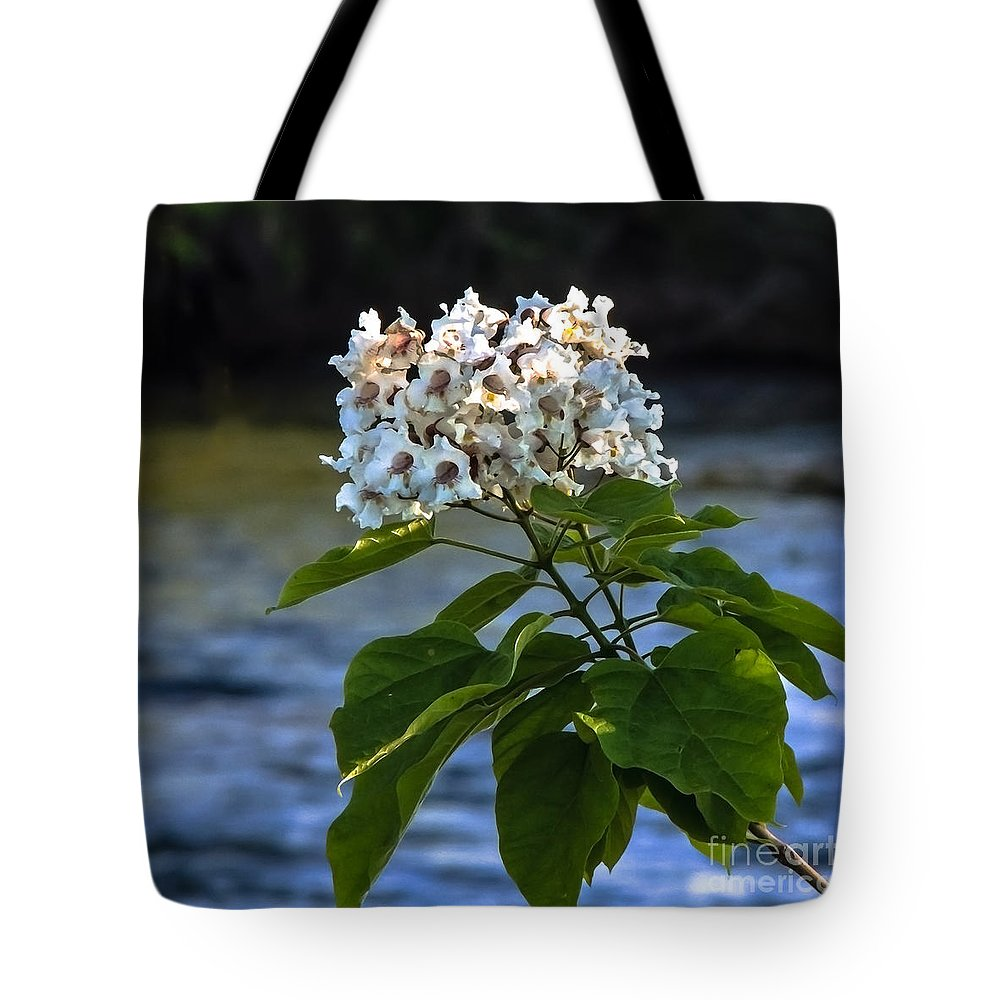 Catalpa Tote Bag featuring the photograph Catalpa Beauty by Robert Bales