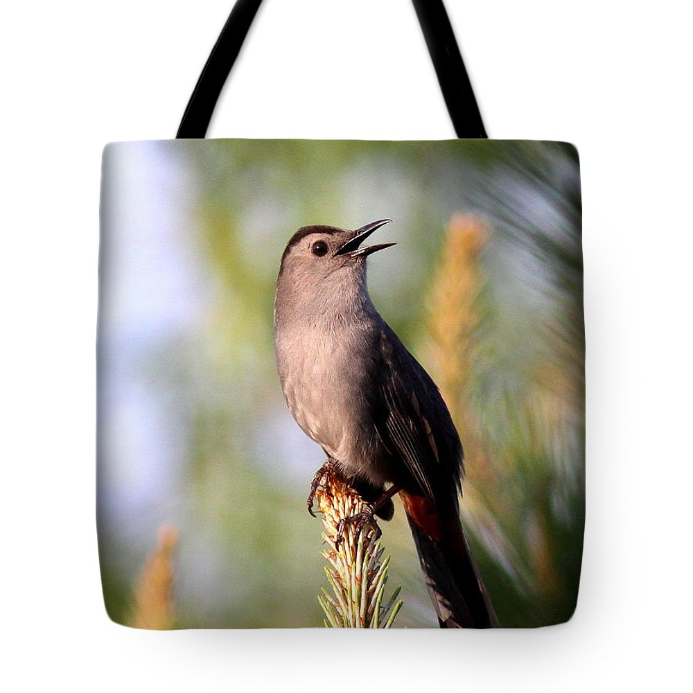 Catbird Tote Bag featuring the photograph Catbird In Pine by Travis Truelove